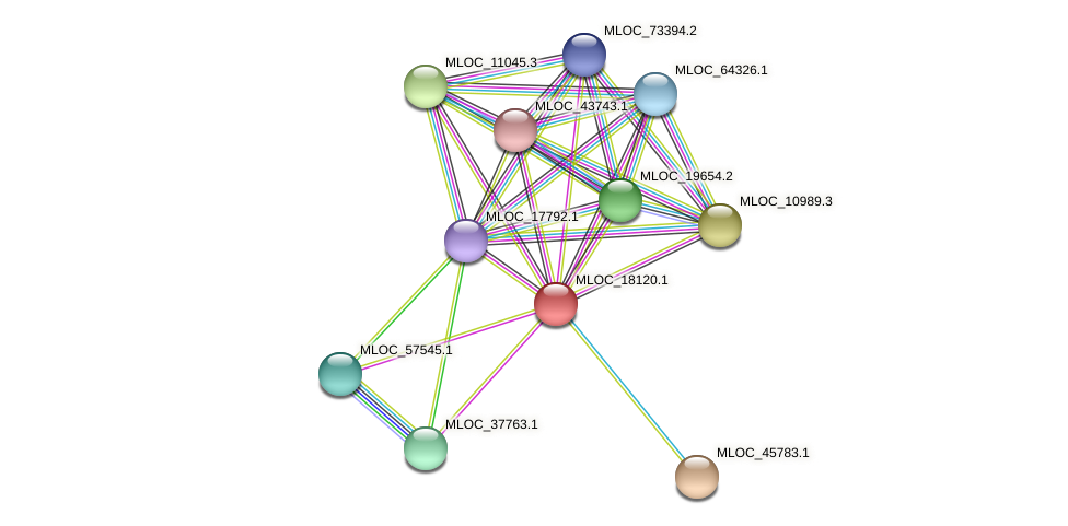 MLOC_18120.1 protein (Hordeum vulgare) - STRING interaction network
