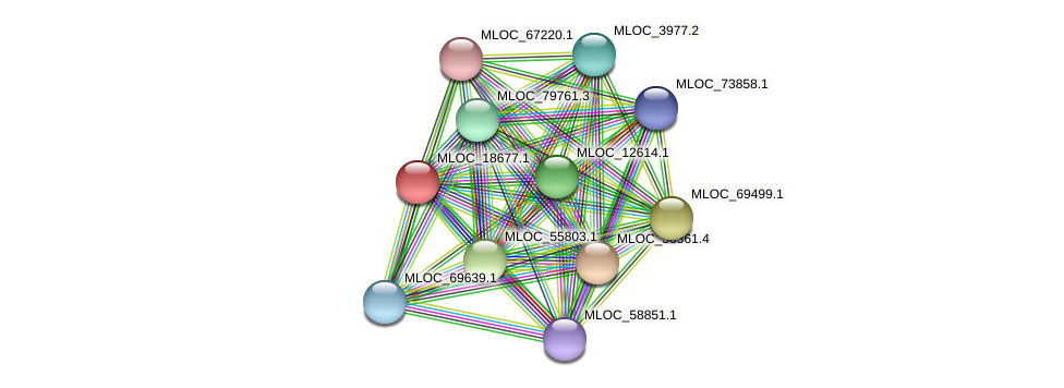 MLOC_18677.1 protein (Hordeum vulgare) - STRING interaction network