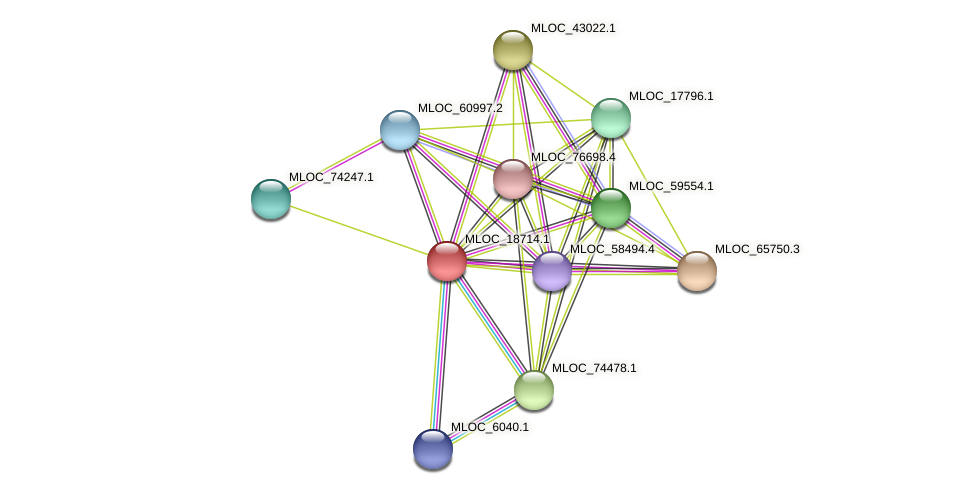 MLOC_18714.1 protein (Hordeum vulgare) - STRING interaction network