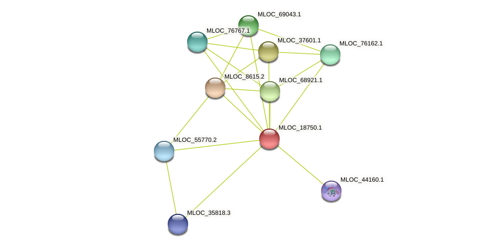 MLOC_18750.1 protein (Hordeum vulgare) - STRING interaction network