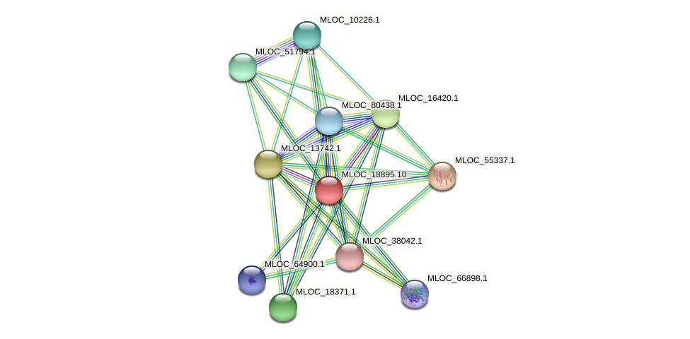 MLOC_18895.10 protein (Hordeum vulgare) - STRING interaction network
