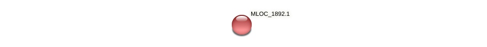 MLOC_1892.1 protein (Hordeum vulgare) - STRING interaction network