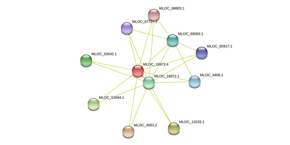 MLOC_18973.4 protein (Hordeum vulgare) - STRING interaction network