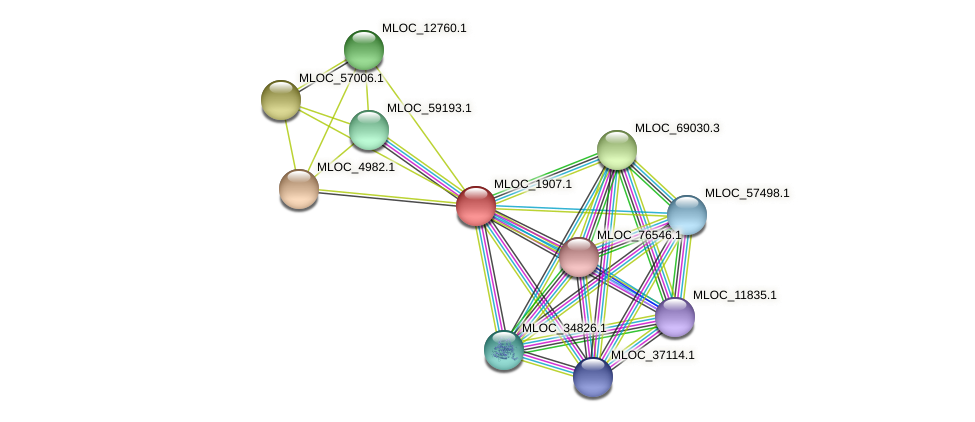 MLOC_1907.1 protein (Hordeum vulgare) - STRING interaction network