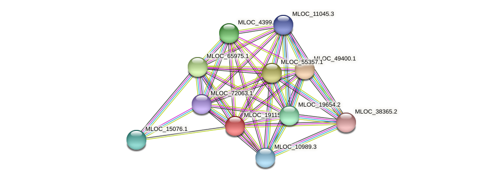 MLOC_19115.6 protein (Hordeum vulgare) - STRING interaction network
