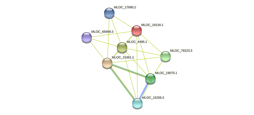 MLOC_19134.1 protein (Hordeum vulgare) - STRING interaction network