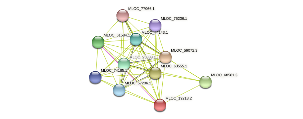 MLOC_19218.2 protein (Hordeum vulgare) - STRING interaction network