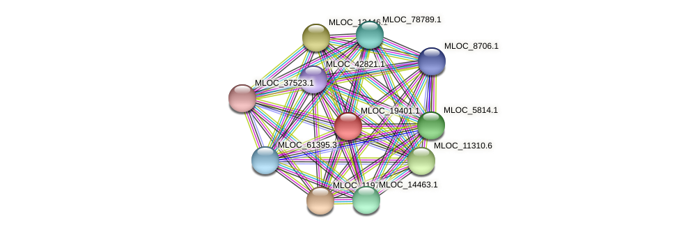 MLOC_19401.1 protein (Hordeum vulgare) - STRING interaction network