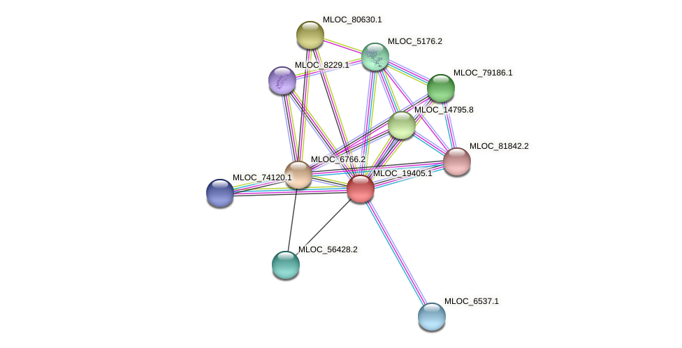 MLOC_19405.1 protein (Hordeum vulgare) - STRING interaction network