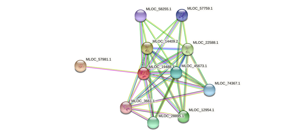 MLOC_19488.1 protein (Hordeum vulgare) - STRING interaction network