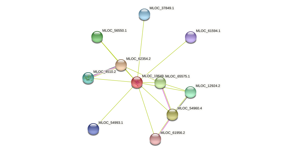 MLOC_19649.1 protein (Hordeum vulgare) - STRING interaction network