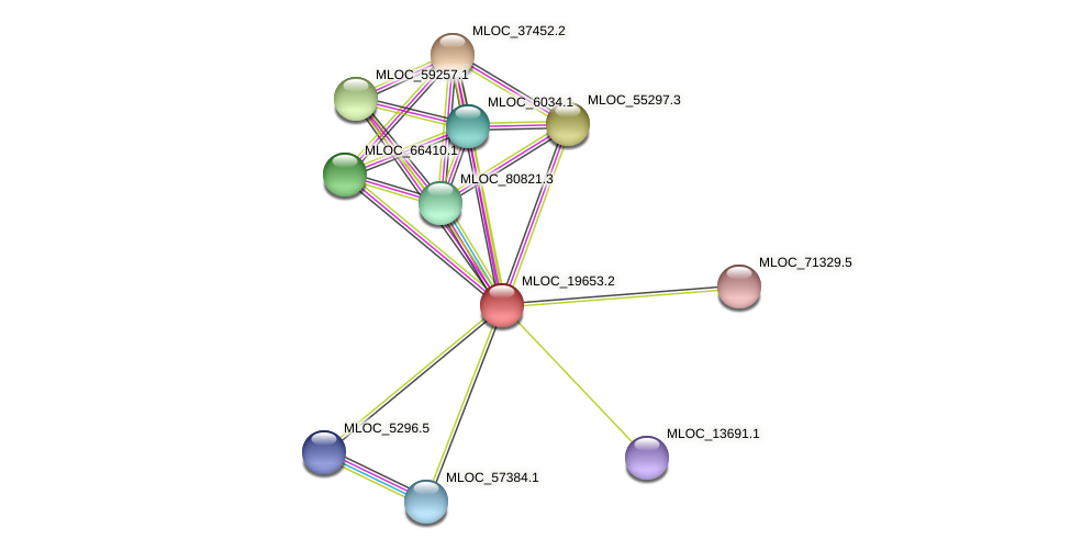 MLOC_19653.2 protein (Hordeum vulgare) - STRING interaction network