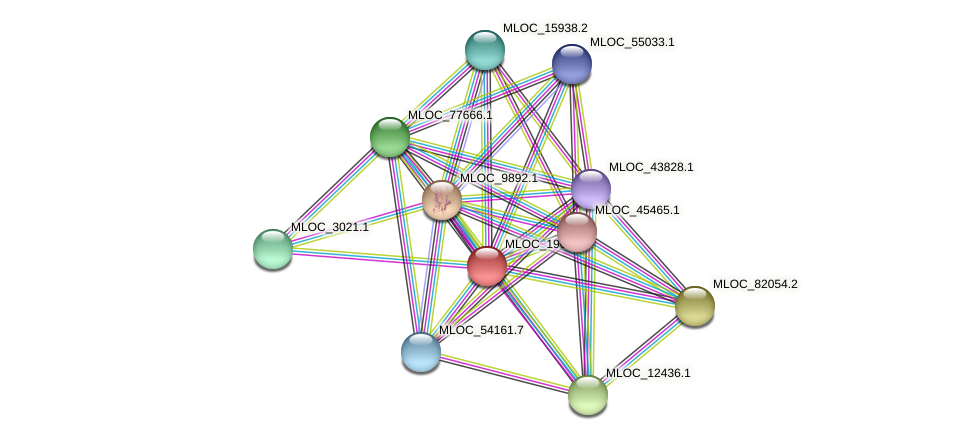 MLOC_19686.5 protein (Hordeum vulgare) - STRING interaction network