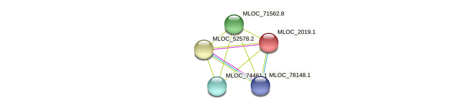 MLOC_2019.1 protein (Hordeum vulgare) - STRING interaction network