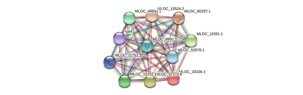MLOC_20336.1 protein (Hordeum vulgare) - STRING interaction network
