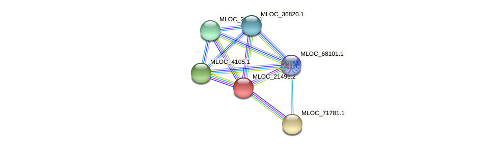 MLOC_21496.2 protein (Hordeum vulgare) - STRING interaction network