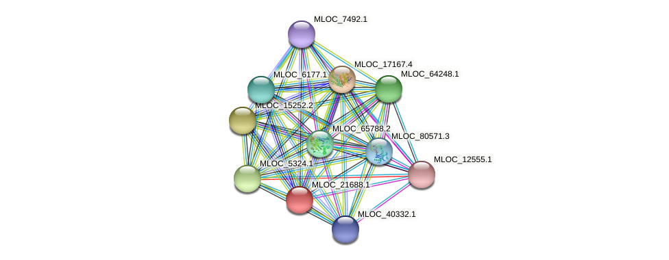 MLOC_21688.1 protein (Hordeum vulgare) - STRING interaction network