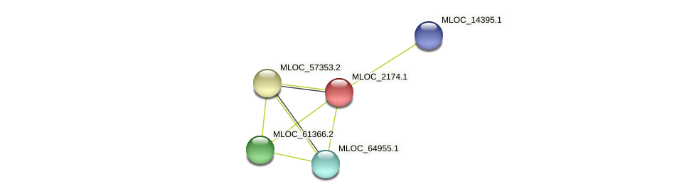 MLOC_2174.1 protein (Hordeum vulgare) - STRING interaction network