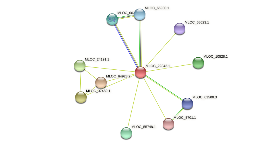 MLOC_22343.1 protein (Hordeum vulgare) - STRING interaction network