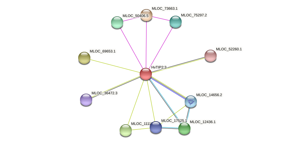 MLOC_22808.1 protein (Hordeum vulgare) - STRING interaction network
