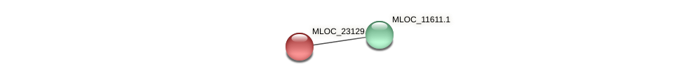 MLOC_23129.1 protein (Hordeum vulgare) - STRING interaction network