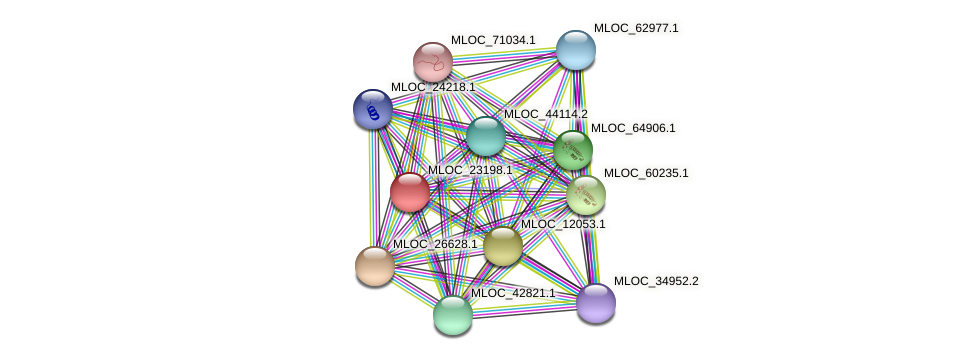 MLOC_23198.1 protein (Hordeum vulgare) - STRING interaction network