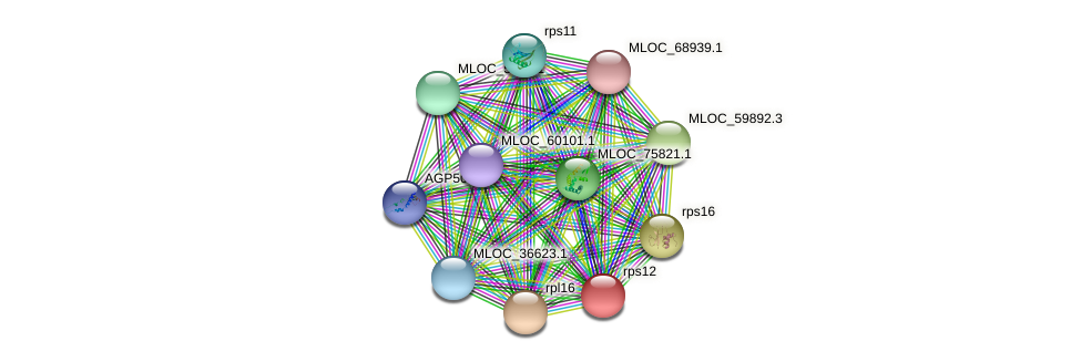 rps12 protein (Hordeum vulgare) - STRING interaction network