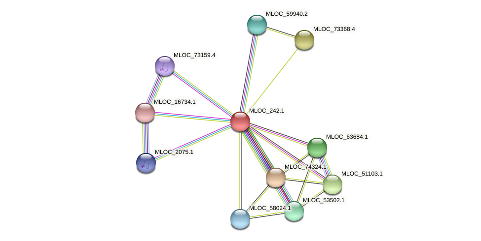 MLOC_242.1 protein (Hordeum vulgare) - STRING interaction network