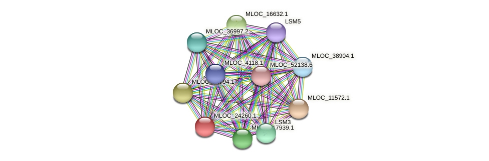 MLOC_24260.1 protein (Hordeum vulgare) - STRING interaction network