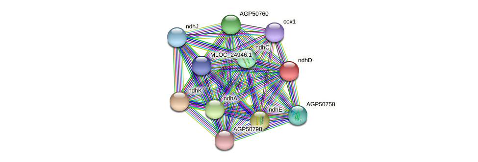 ndhD protein (Hordeum vulgare) - STRING interaction network