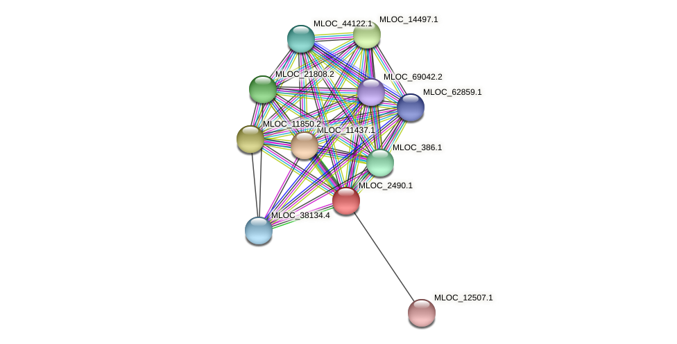 MLOC_2490.1 protein (Hordeum vulgare) - STRING interaction network