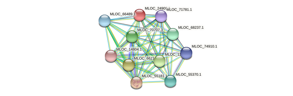 MLOC_24900.1 protein (Hordeum vulgare) - STRING interaction network