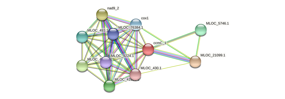 MLOC_24918.1 protein (Hordeum vulgare) - STRING interaction network