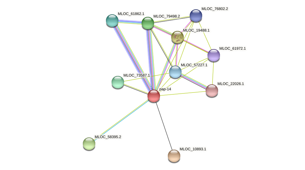 pap-14 protein (Hordeum vulgare) - STRING interaction network