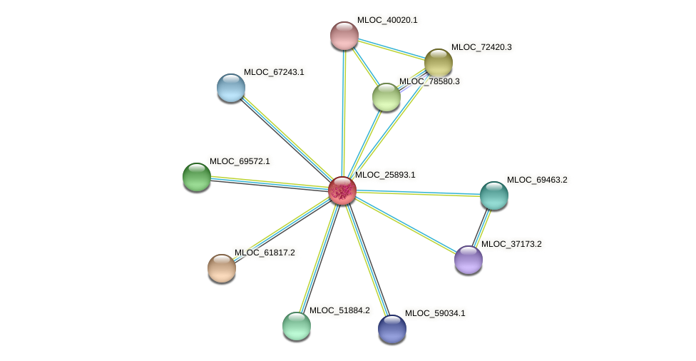 MLOC_25893.1 protein (Hordeum vulgare) - STRING interaction network