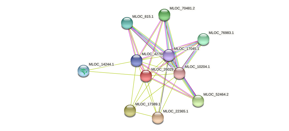 MLOC_26029.3 protein (Hordeum vulgare) - STRING interaction network