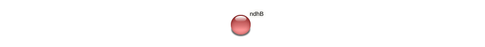 ndhB protein (Hordeum vulgare) - STRING interaction network