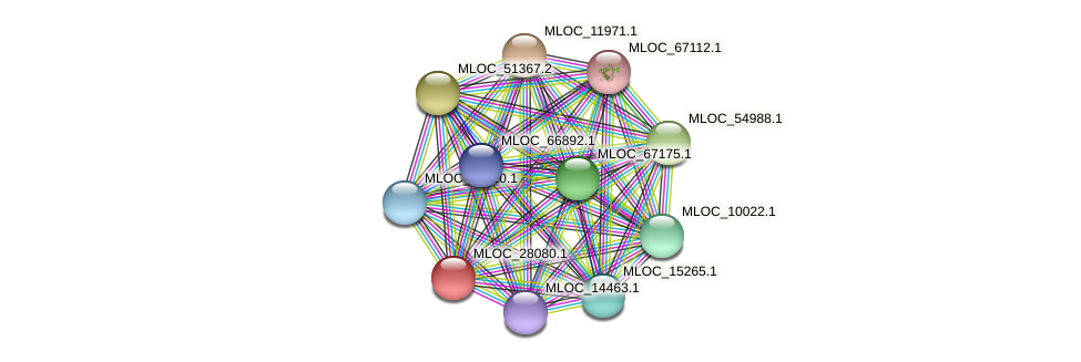 MLOC_28080.1 protein (Hordeum vulgare) - STRING interaction network
