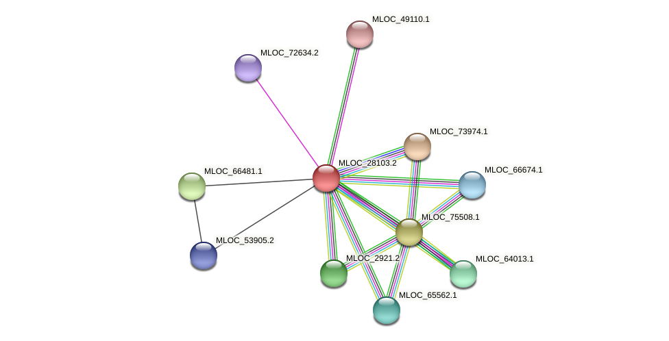 MLOC_28103.2 protein (Hordeum vulgare) - STRING interaction network