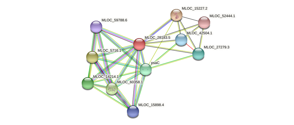 MLOC_28183.5 protein (Hordeum vulgare) - STRING interaction network