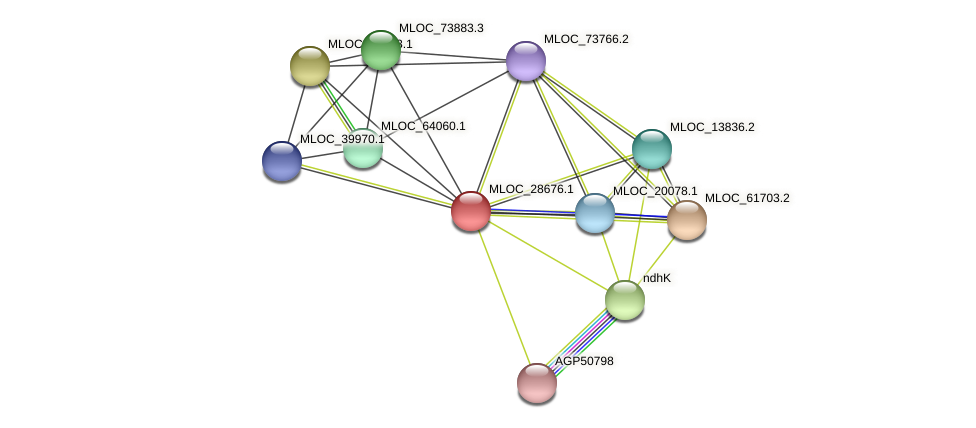MLOC_28676.1 protein (Hordeum vulgare) - STRING interaction network