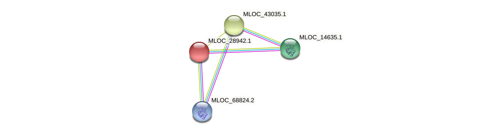 MLOC_28942.1 protein (Hordeum vulgare) - STRING interaction network