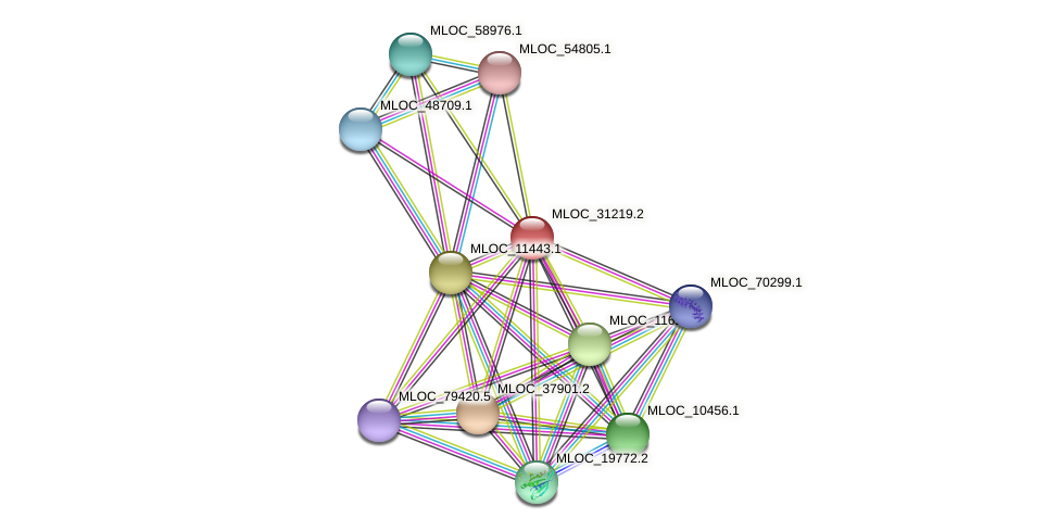 MLOC_31219.2 protein (Hordeum vulgare) - STRING interaction network