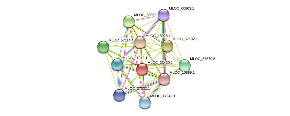 MLOC_33439.1 protein (Hordeum vulgare) - STRING interaction network