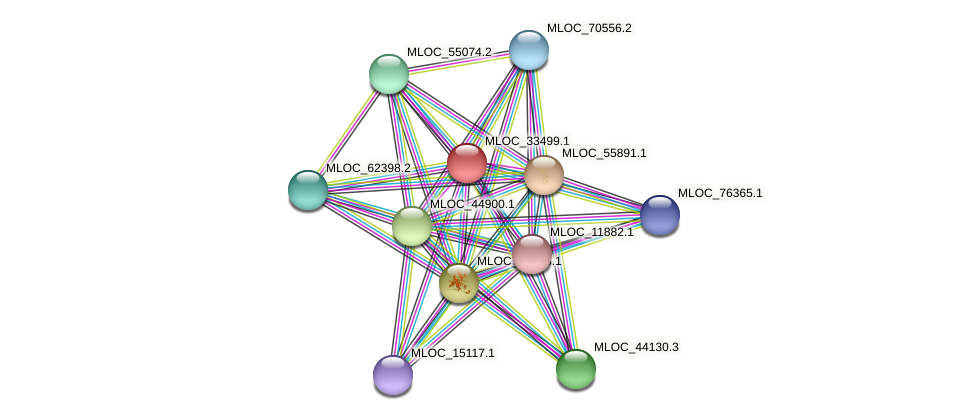 MLOC_33499.1 protein (Hordeum vulgare) - STRING interaction network