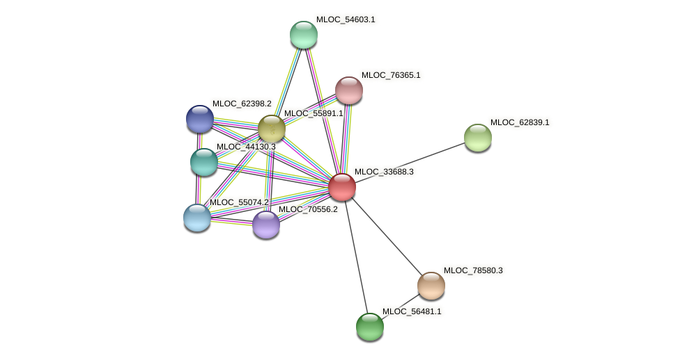 MLOC_33688.3 protein (Hordeum vulgare) - STRING interaction network