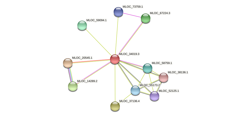 MLOC_34019.1 protein (Hordeum vulgare) - STRING interaction network