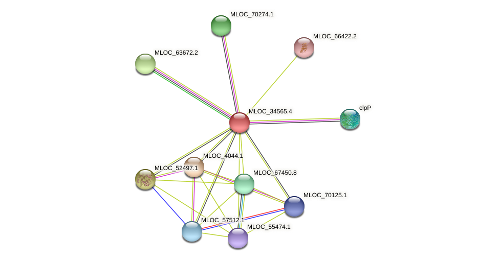 MLOC_34565.4 protein (Hordeum vulgare) - STRING interaction network