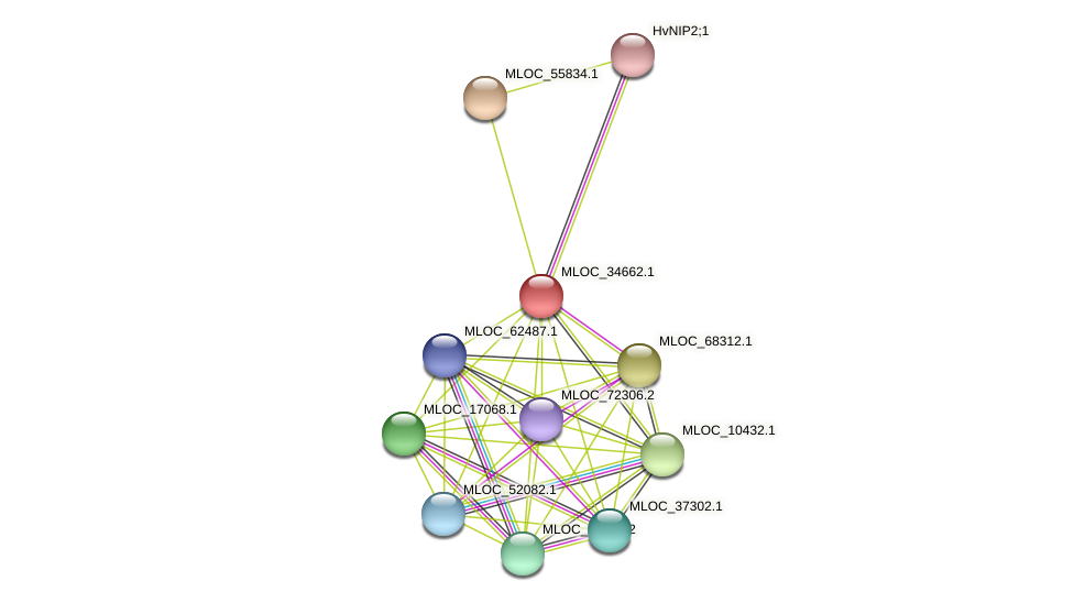 MLOC_34662.1 protein (Hordeum vulgare) - STRING interaction network