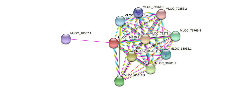 MLOC_34755.2 protein (Hordeum vulgare) - STRING interaction network